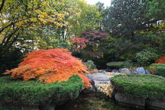 Landscaped Japanese garden. Scenic view of landscaped traditional Japanese garden in bloom Stock Images