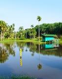 Landscaped parkerar trädreflexion i vatten Royaltyfri Fotografi