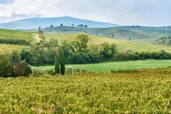 Landscapein Chianti region in province of Siena. Tuscany. Italy. Landscape in Chianti region in province of Siena. Tuscany landscape. Italy royalty free stock images