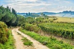 Landscapein Chianti region in province of Siena. Tuscany. Italy. Landscape in Chianti region in province of Siena. Tuscany landscape. Italy royalty free stock image