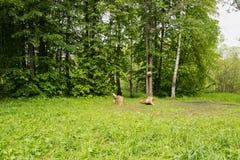 Landscapepicnic Bereich des Parksommers, Wege, Fluss stockfoto
