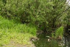 Landscapepicnic Bereich des Parksommers, Wege, Fluss lizenzfreies stockfoto