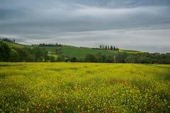 Landscaper της Τοσκάνης αγροτικός πράσινος μπλε κίτρινος της Ιταλίας επαρχίας πορειών Στοκ Φωτογραφίες