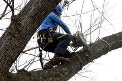 Landscaper cutting a tree. A landscaper cuts a limb off a tree during a landscaping job in Greenbelt, Md stock image