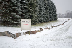Winter rocks for sale Royalty Free Stock Photos