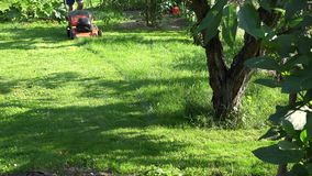 Landscaper man mowing grass between flowers and fruit trees in garden yard. 4K stock footage