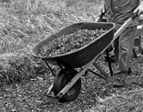 Landscaper moving a wheelbarrow load of mulch stock images