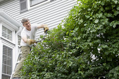 Landscaper Trimming Climbing Vines Stock Photo