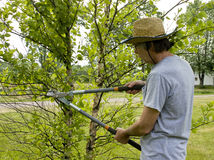 Landscaper trimming trees. With a shears wearing a straw hat stock photo
