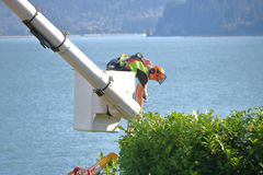 Landscaper Using a Hoist, Bucket or Lift. A landscaper uses a hoist or lift to trim tall bushes in a yard in Vancouver, British Columbia on July 24, 2017 stock images