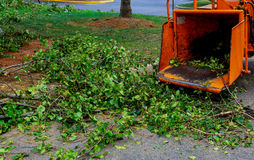 Landscapers using chipper machine to remove and haul chainsaw tree branches. Machine for cutting trees stock image
