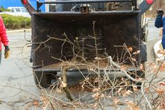 Landscapers using chipper machine to remove and haul chainsaw tree branches royalty free stock image