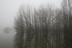 landscapes туманное Стоковая Фотография