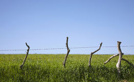 Landscapes. Fields sowed with fences of wood Stock Photos