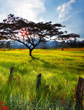 Landscapes. Beautifull viuw of big trees and sun back Stock Photography