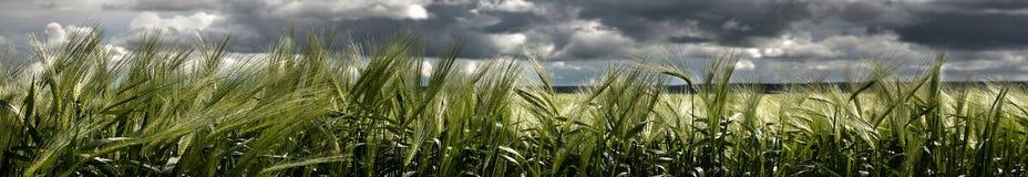 landscapes панорамы Стоковая Фотография