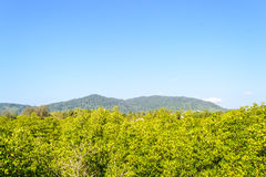 Landscapes beautiful tree with background mountain and blue sky in sunny day Royalty Free Stock Photography