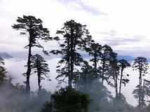 Landscapes in Bhutan. The beautiful landscapes  in Bhutan Royalty Free Stock Image