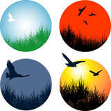 Landscapes with birds. Grass landscapes with birds