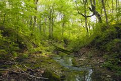 Landscapes of the Caucasus, beech forest, seashore, travel, excursions. Landscapes of the Caucasus and the Black Sea coast, beech forest, seashore, travel royalty free stock photo