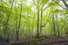Landscapes of the Caucasus, beech forest, seashore, travel, excursions. Landscapes of the Caucasus and the Black Sea coast, beech forest, seashore, travel stock images