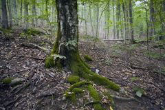 Landscapes of the Caucasus, beech forest, seashore, travel, excursions. Landscapes of the Caucasus and the Black Sea coast, beech forest, seashore, travel stock photos