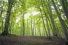Landscapes of the Caucasus, beech forest, seashore, travel, excursions. Landscapes of the Caucasus and the Black Sea coast, beech forest, seashore, travel stock photography