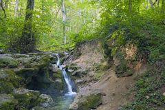 Landscapes of the Caucasus, beech forest, seashore, travel, excursions. Landscapes of the Caucasus and the Black Sea coast, beech forest, seashore, travel stock photo