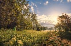 Landscapes colors. Landscape summer wood landscape summer wood grass drop dew sky Stock Images