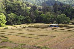 Landscapes of Field a. Landscapes of cornfield in Mae kong son, Thailand Stock Images