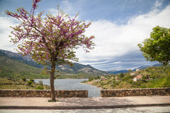 Landscapes of Corsica Stock Photo