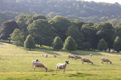 Landscapes countryside England Stock Photo