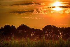Landscapes at dawn with sunrise on the corn field royalty free stock images