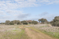 Landscapes of the Dehesa de Extremadura Royalty Free Stock Images