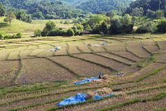 Landscapes of Field. Landscapes of cornfield in Mae kong son, Thailand Stock Photography
