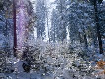 Picturesque winter landscapes of mountain landscapes in sunny light stock photo