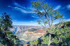 Landscapes at grand canyon  arizona Royalty Free Stock Photos
