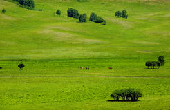 Landscapes of Grassland. The Landscapes of Bashang Grassland of Inner Mongolia Royalty Free Stock Photos