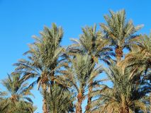 Landscape of green palm trees in oasis in central Morocco in old village of Oulad. Landscapes of green palm trees in oasis in central Morocco in old village of Royalty Free Stock Photo