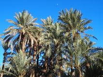 Landscape of green palm trees in oasis in central Morocco in old village of Oulad. Landscapes of green palm trees in oasis in central Morocco in old village of Stock Photos