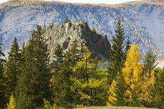 Landscapes of the Mountains at autumn, Altai Republic Stock Images