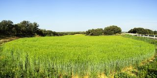 Landscapes and nature in the light of day. Agricultural landscapes and nature in the light of day Stock Photo
