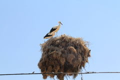 Landscapes of Turkey- stork Stock Photo