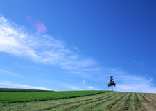 Landscapes Under The Great Blue Sky Royalty Free Stock Photography