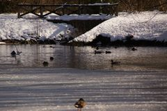 Landscapes wintry - Some snow in forest, birds and ducks. Landscape covered with snow in forest, around a lake ice-cold and covered with hoarfrost. The water is royalty free stock photo
