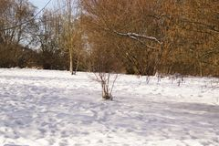 Landscapes wintry - Sun and snow - Elancourt, France. A covered with snow forest, trees are surrounded with very white snow lit by the sunlight. Trees have no Royalty Free Stock Images