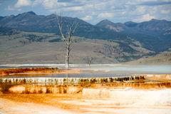 Landscapes of yellow stone national park Stock Image