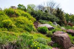 Landscaping, arboretum Sofievka Stock Image