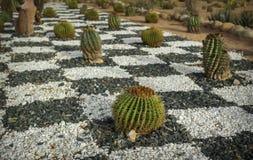 Landscaping, beautiful flowers grow cacti Stock Photos