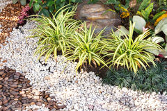 Landscaping combinations of plant and grass Royalty Free Stock Image